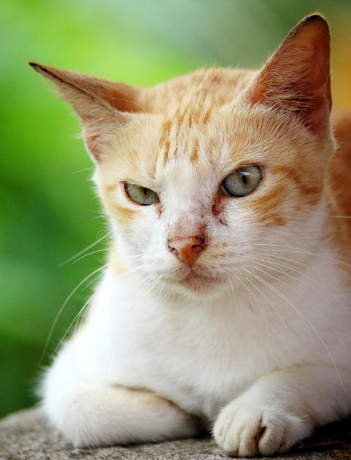 Sr. Gato imagenes de archivo