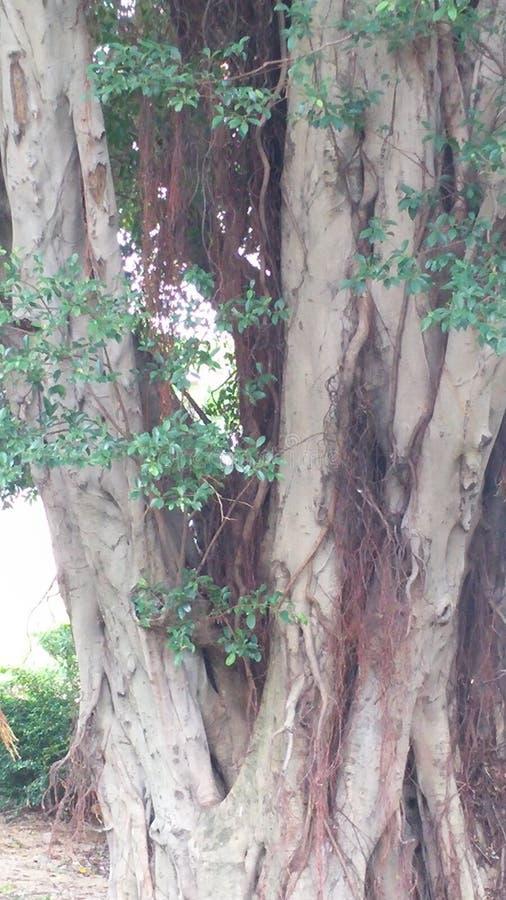 Sradichi l'albero fotografia stock