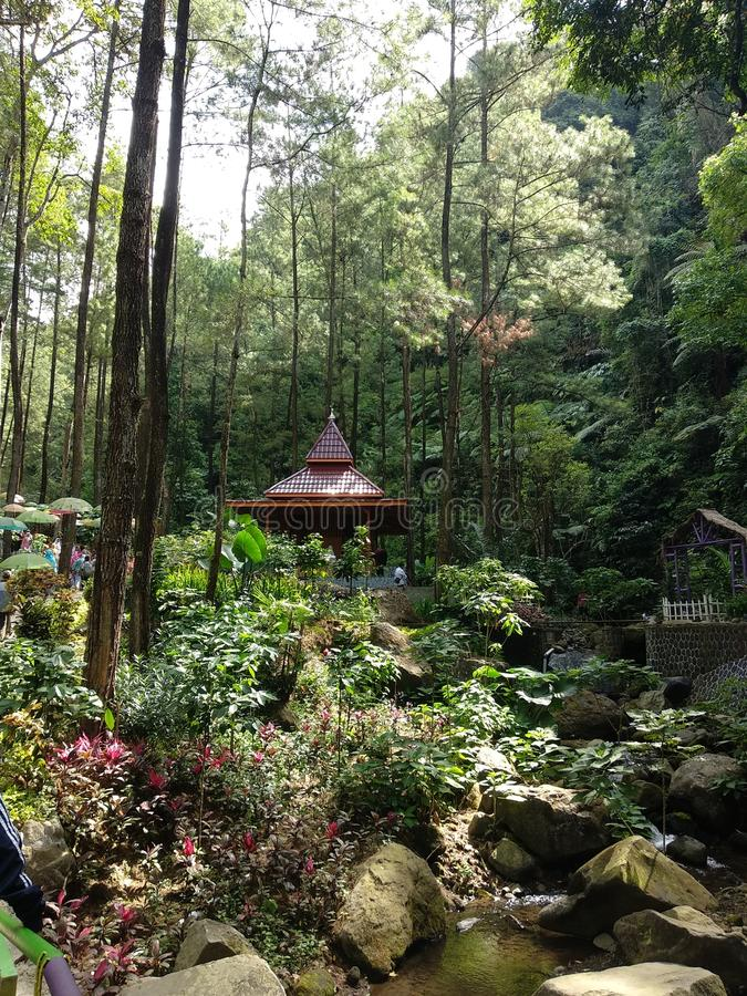Srambang Forest, Ngawi. Mountain Resort. Srambang Forest is a forest in Ngawi, Indonesia royalty free stock image