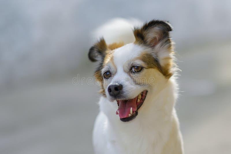 Srd lycklig hund som finner hans ägare royaltyfri foto
