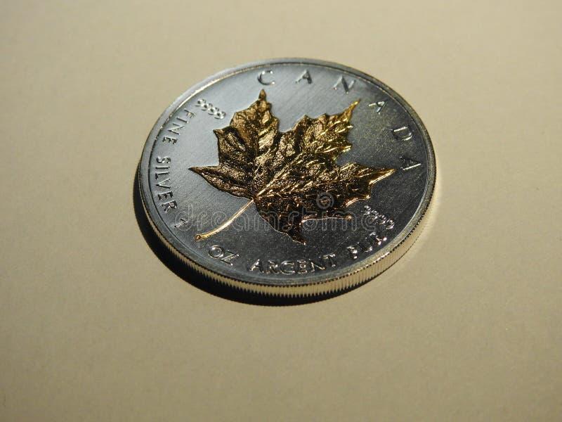 Srebny liść klonowy zdjęcie royalty free