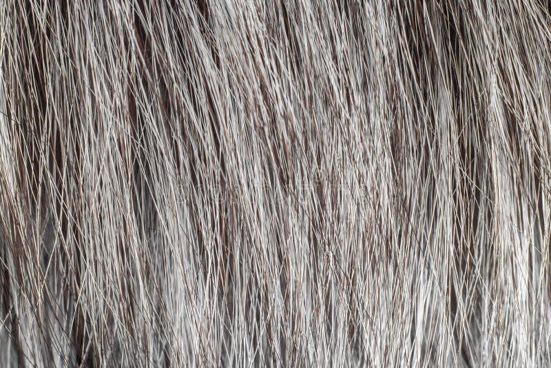 Srebny naturalny Zwierzęcy futerkowy tekstury tło makro- zdjęcia royalty free