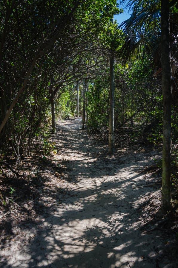 Srebny Palmowy ślad - Bahia Honda, Floryda fotografia royalty free