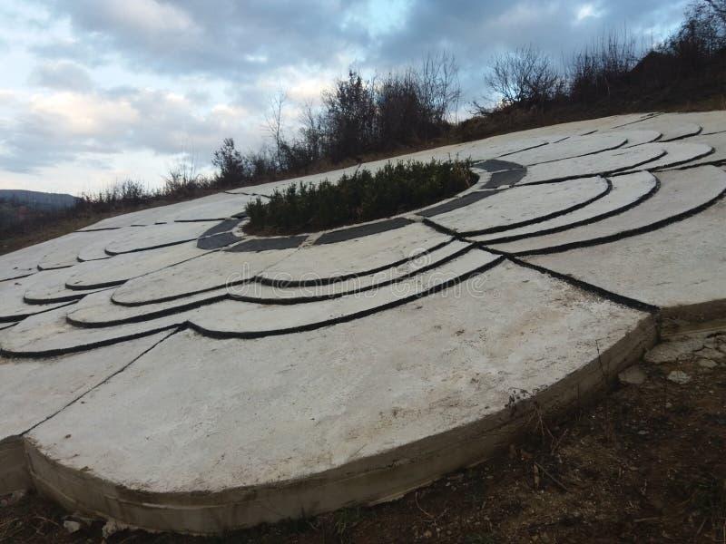 Srebrenica kwiat zdjęcie royalty free