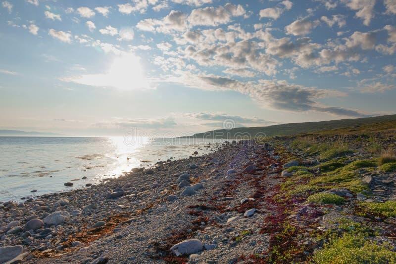 SREDNIY-HALVÖN, den MURMANSK REGIONEN, kastade alger surfar, kusten av det arktiska havet, den Sredniy halvön royaltyfria foton