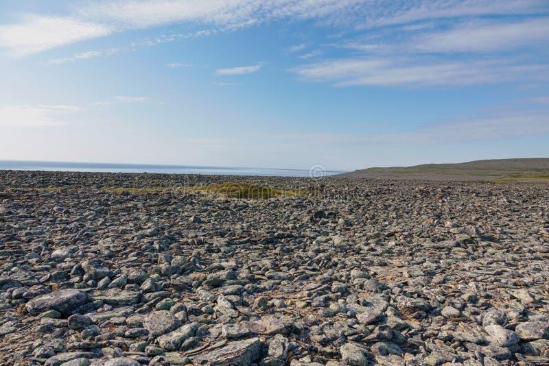 SREDNIY-HALVÖN, den MURMANSK REGIONEN, kastade alger surfar, kusten av det arktiska havet, den Sredniy halvön royaltyfri fotografi