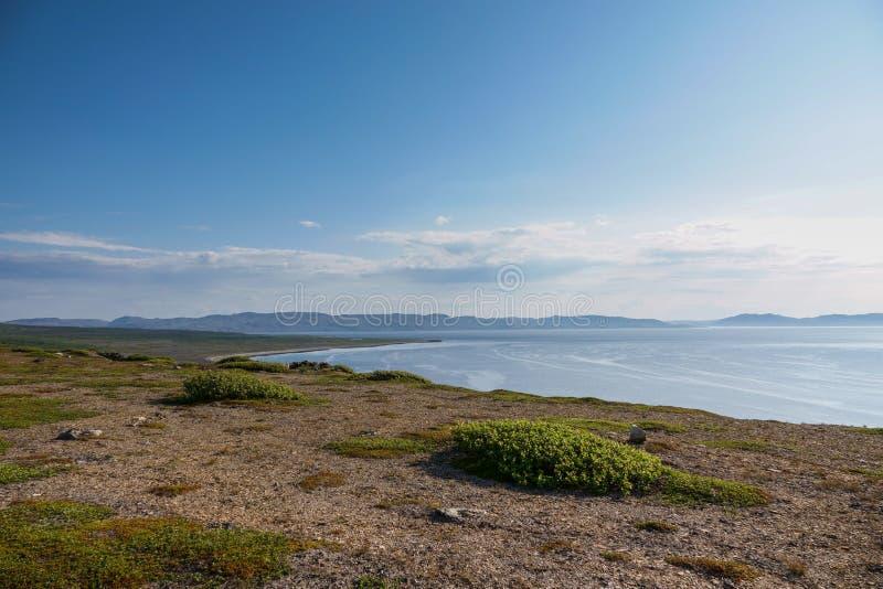 SREDNIY półwysep, MURMANSK region, algi rzucać surfuje, brzeg Arktyczny ocean, Sredniy półwysep obraz stock