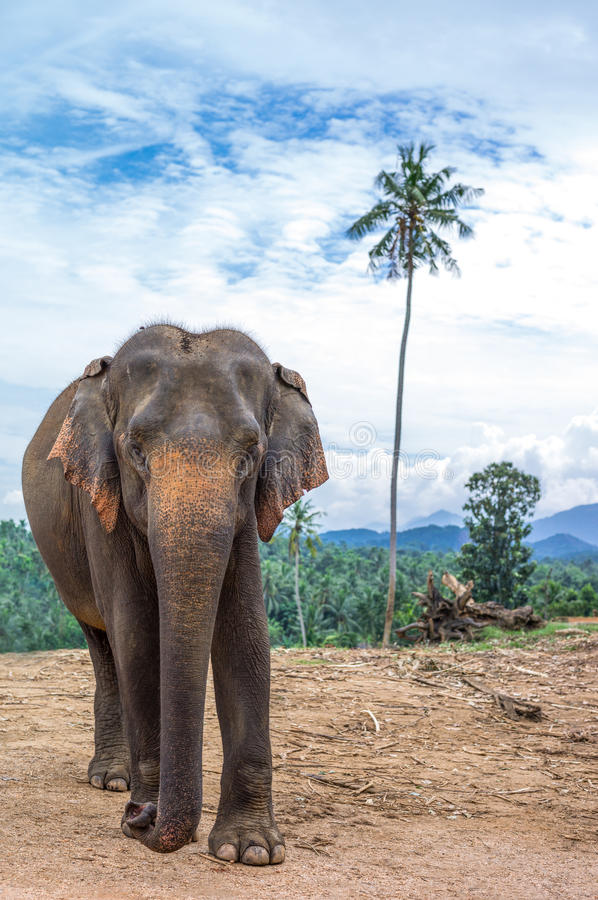 Sri Lanka foto de stock royalty free