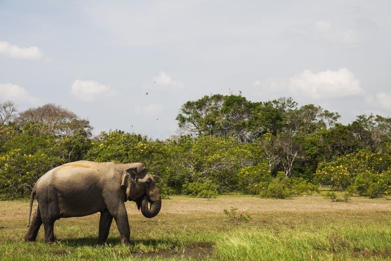 Sri Lanka royalty-vrije stock fotografie