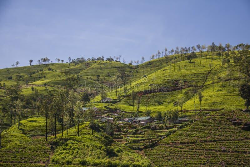 Sri Lanka royalty-vrije stock afbeelding