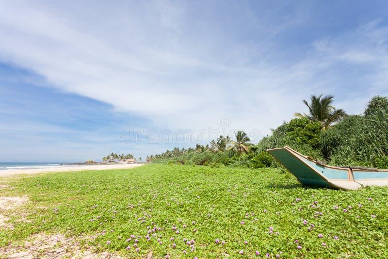 Sri Lanka - Ahungalla - un prado enorme de la flor en la playa fotos de archivo libres de regalías