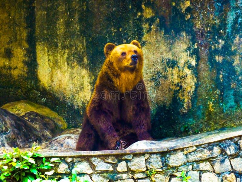 SRI LANKA björn royaltyfri fotografi