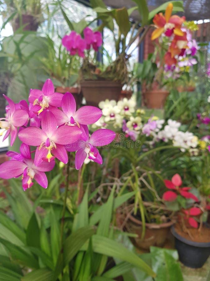 Sri Lanka blommor royaltyfri fotografi