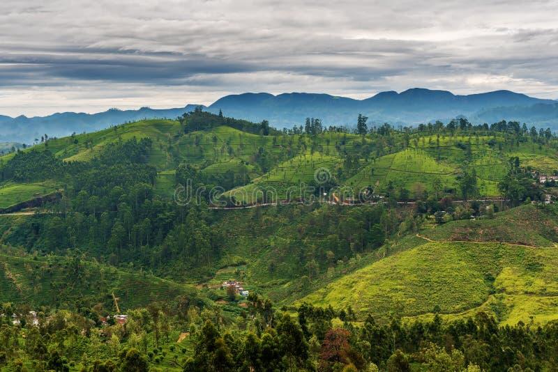 Sri Lanka : champs des montagnes célèbres de thé de la Ceylan photo libre de droits