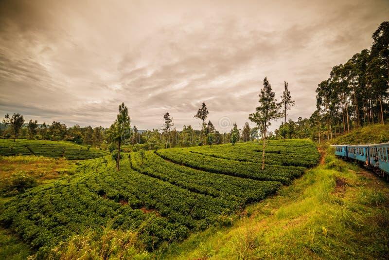 Sri Lanka: de beroemde gebieden van de het hooglandthee van Ceylon stock fotografie