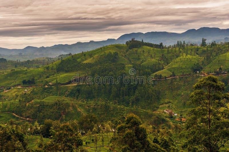 Sri Lanka: de beroemde gebieden van de het hooglandthee van Ceylon stock foto's