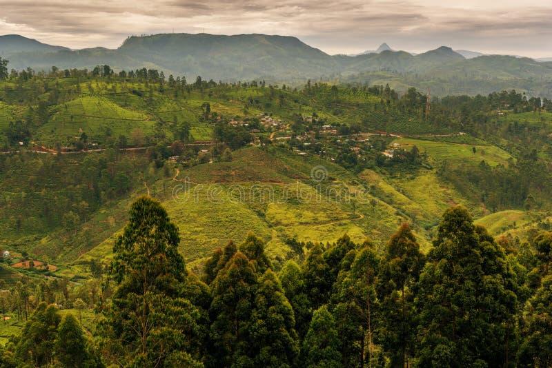 Sri Lanka: de beroemde gebieden van de het hooglandthee van Ceylon stock afbeeldingen