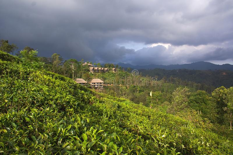 Sri Lanka - Ella lizenzfreies stockbild