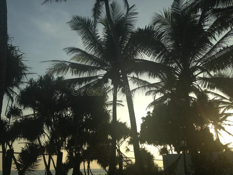Sri Lanka gömma i handflatan royaltyfri fotografi