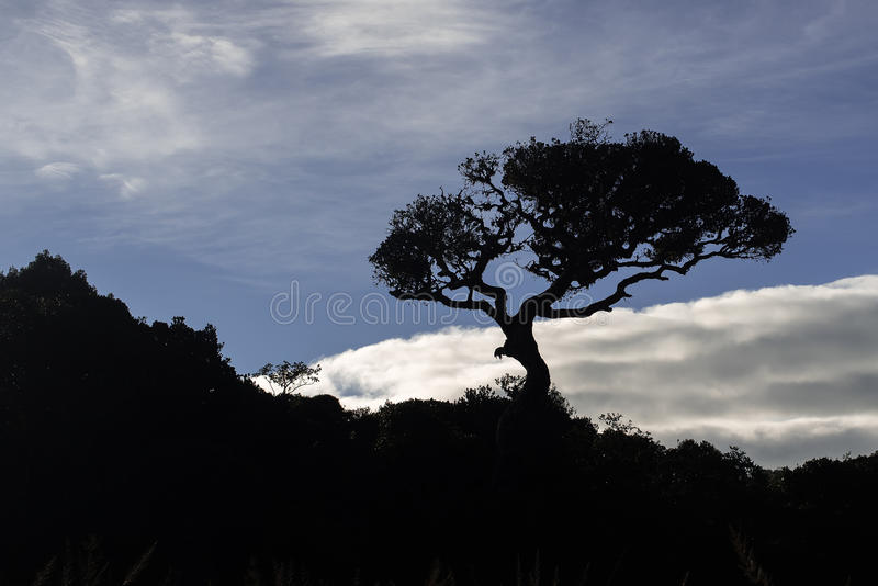 Sri Lanka: Horton Plains National Park arkivfoto