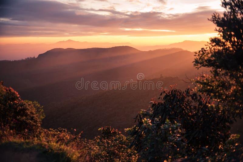 Sri Lanka: Horton Plains National Park fotografering för bildbyråer