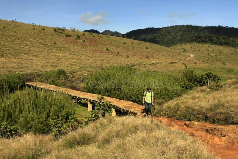 Sri Lanka, Horton równiny trekking - fotografia royalty free