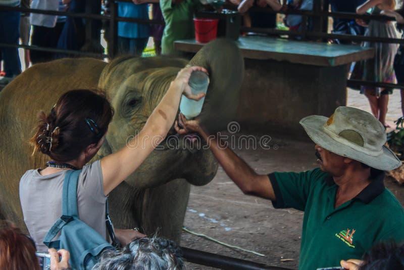 Sri Lanka, im November 2011. Pinnawala-Elefant Orphanag. lizenzfreie stockfotos