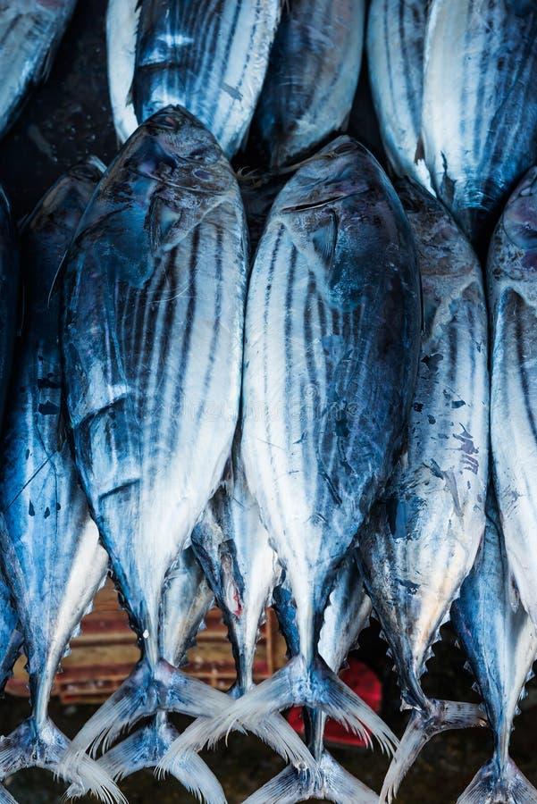Sri-Lanka market, healthy food. Fresh raw fish in the market. seafood market royalty free stock photos