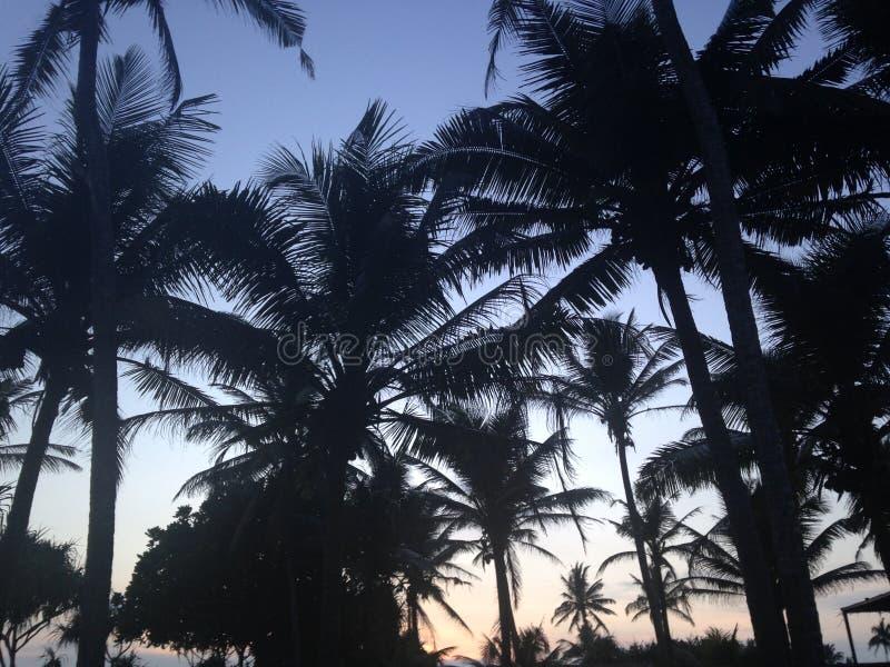 Sri Lanka-Palmen lizenzfreies stockfoto