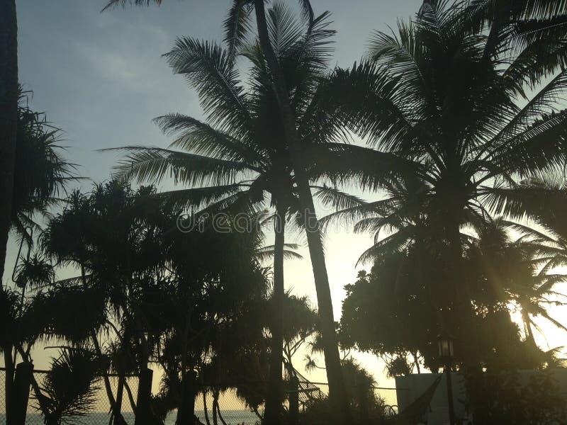 Sri Lanka-Palmen lizenzfreie stockfotografie