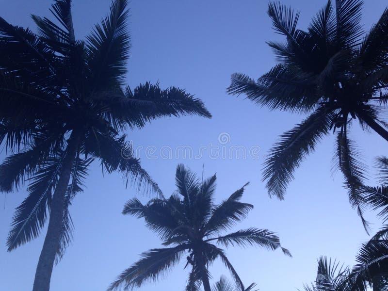 Sri Lanka-Palmen stockfotografie