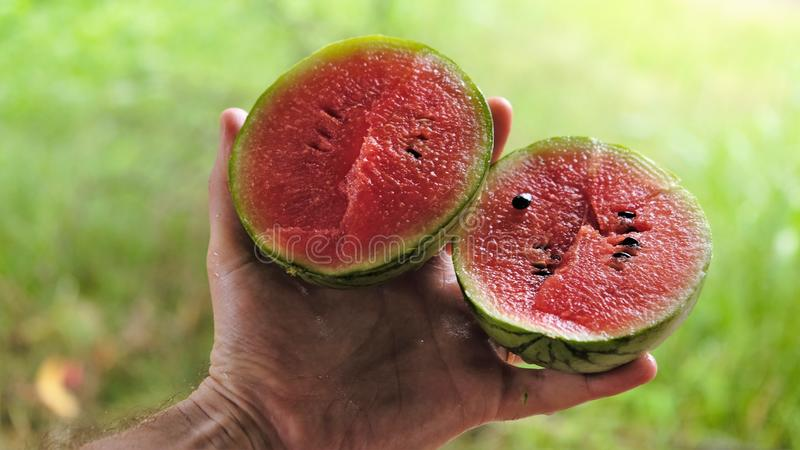 Sri Lanka`s famous small but exotic sweet watermelons stock photo