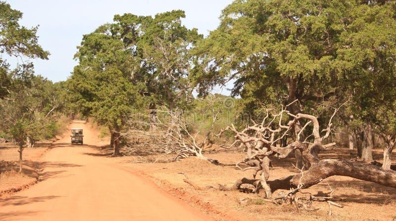 Sri Lanka Safari stockfotos