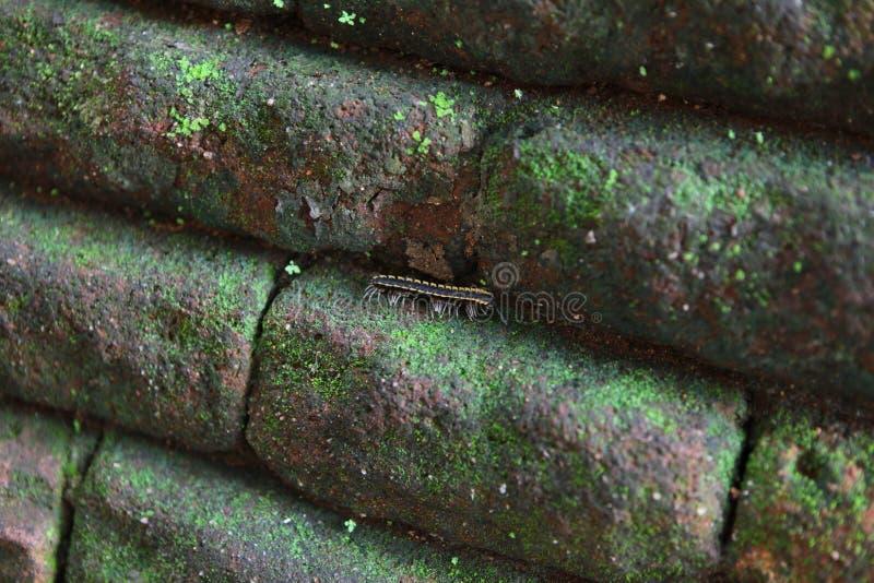 Sri Lanka Sigiria images libres de droits