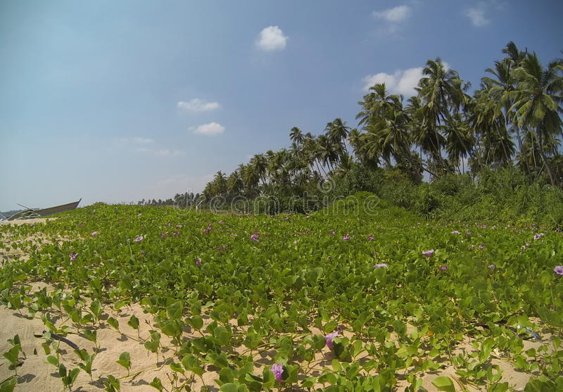 Sri Lanka - Tangalle foto de stock royalty free