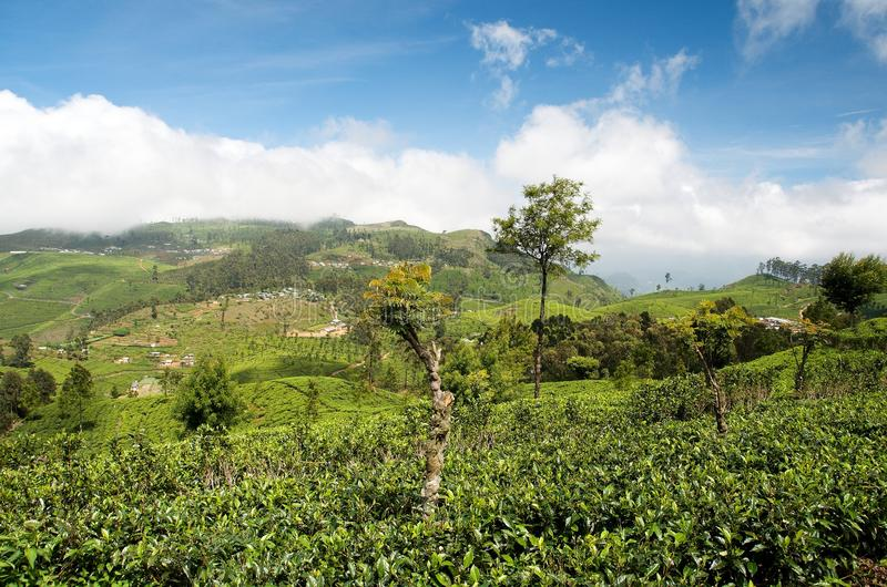 Sri Lanka-theegebieden 3 royalty-vrije stock fotografie