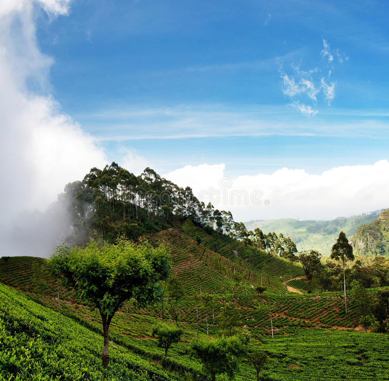 Sri Lanka-theegebieden 4a stock foto's