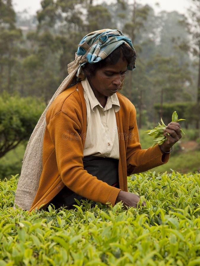 Sri lanka woman 4 royalty free stock photography