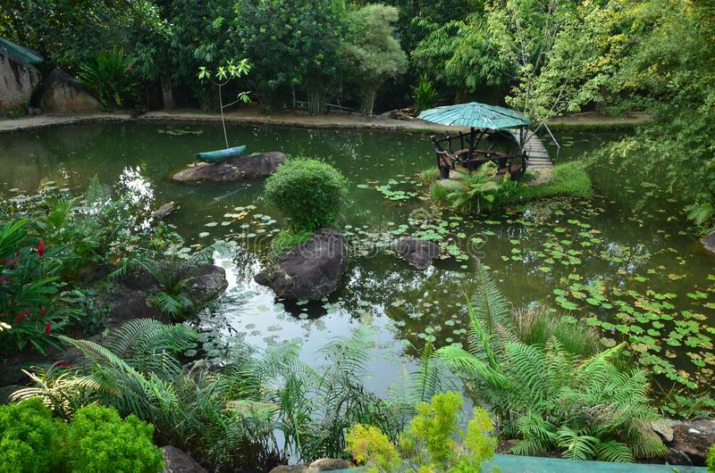 Sri Lankan Nature - Natural Ponds. Sri lankan beautiful nature - Natural Ponds for beautiful landscaping stock image