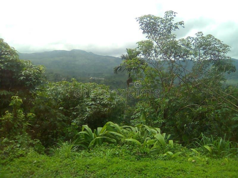 Sri lankan jungle place stock photos