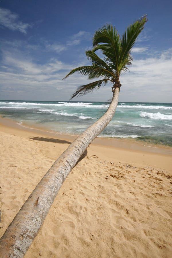 sri lankan na plaży obrazy royalty free