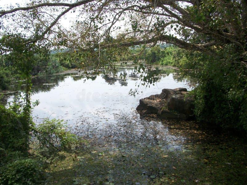 Sri lanki Natura piękni jeziora i rzeki obrazy stock