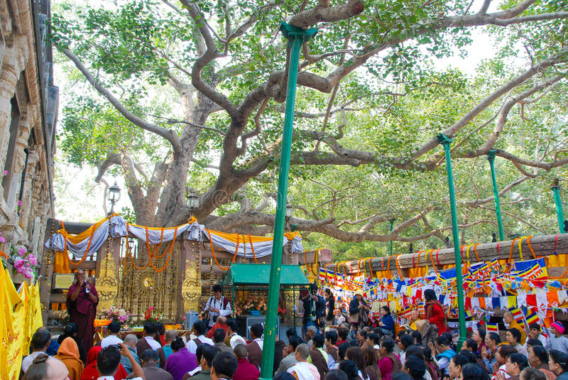 Sri Maha Bodhi drzewo Anuradhapura, Sri Lanka fotografia stock