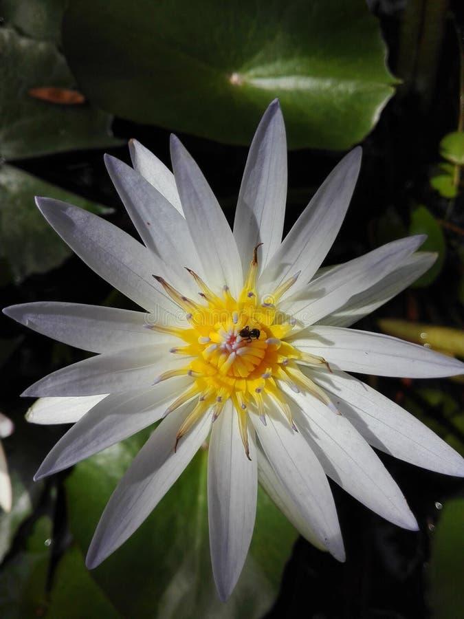 Srilankan groene Aard royalty-vrije stock foto's