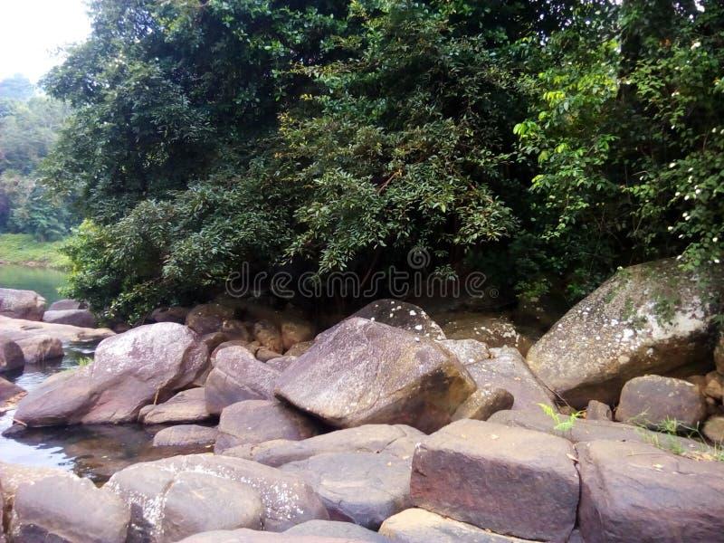 A srilankan river royalty free stock photo