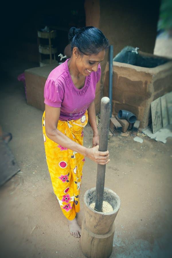Srilankesisk kvinna som arbetar risen