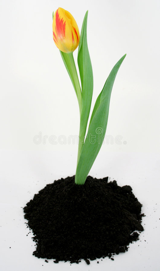 Download Sring is in the air. stock image. Image of sprout, color - 605713