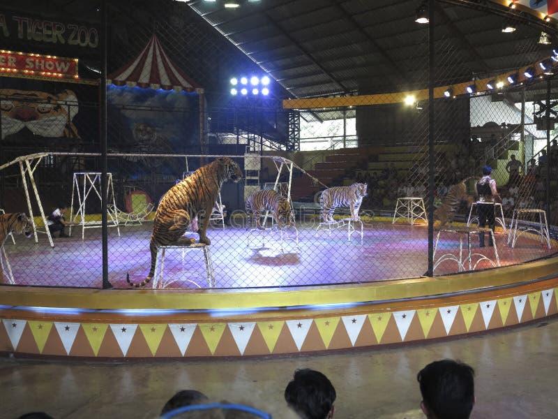 Download Sriracha Tiger Zoo redaktionelles stockfotografie. Bild von tourismus - 90237242