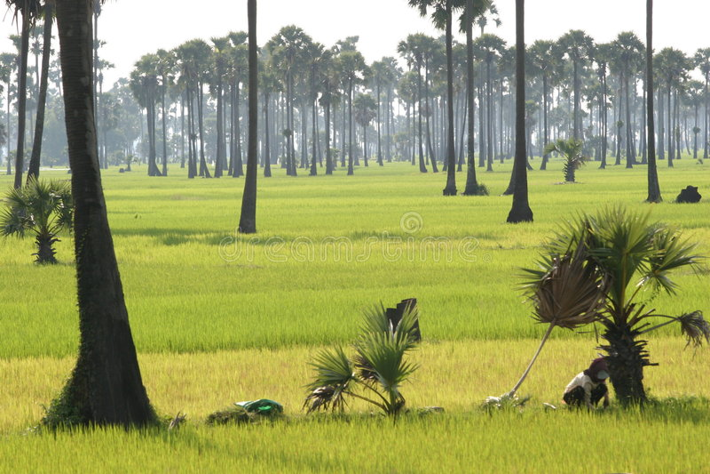 Srok Batheay, Kambodja 2005 royalty-vrije stock afbeelding