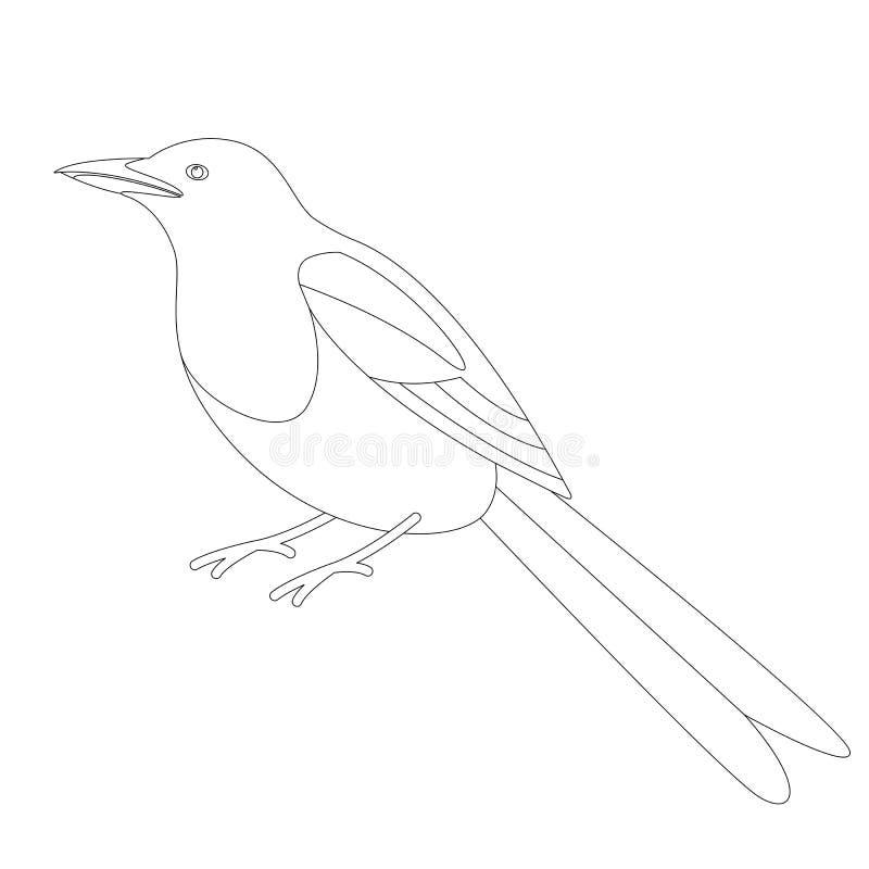 Sroka ptak, wektorowa ilustracja, wykłada remis ilustracja wektor